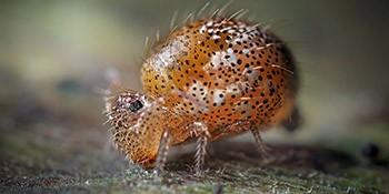 Insekt des Jahres 2016