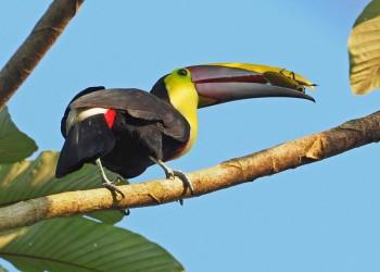 In den Regenwäldern Costa Ricas