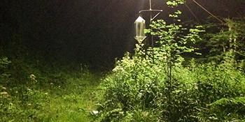 Auswirkungen von zunehmender Lichtverschmutzung auf Bestäuber und ihre Bestäubungsleistung