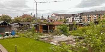 Biodiversität in der Stadt – Kenntnisstand und Herausforderungen