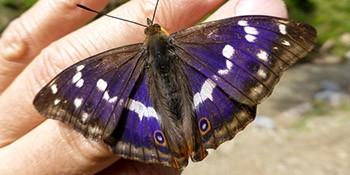 Unterwegs zur Tössscheidi, Insektenbeobachtungen