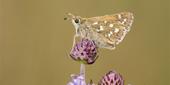 Lepidopterologen-Tagung 2019