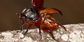 Weichtiere, Spinnentiere und Insekten in unterschiedlichen Vegetationszonen Madagaskars