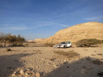 Einblicke in die Entomofauna Omans – zwischen Wüste und subtropischem Wald